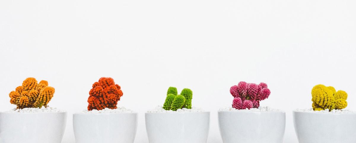 cactus-multicolores-couleur-motiver